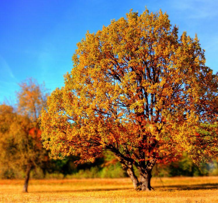 tree-99852